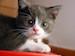 Small_Cat-Wallpaper-